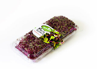 Fresh herb micro leaves rocket salad Flora Export S.G. Israel LTD fresh herbs