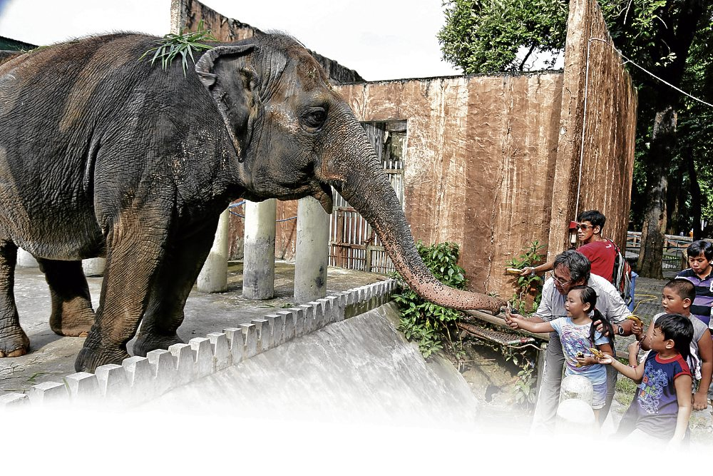 "a look at americas zoos the educational entertainment for children Do we need zoos by andrea c brown said education is a zoo's most in ""no child left inside,"" and said the zoos' programs focus on getting children."