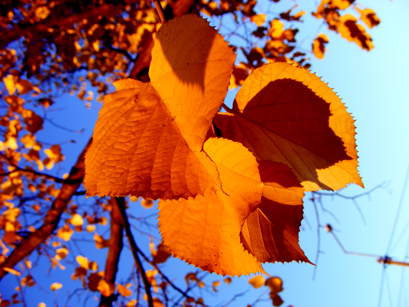 The best top autumn desktop wallpapers 9 En Güzel Sonbahar HD Duvar Kağıtları