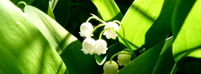 Couverture facebook HD originale muguet