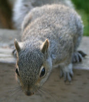 Where are my nuts?! :: All Pretty Things