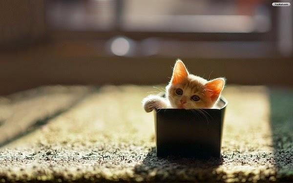 Une Photo chat dans la boite