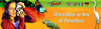 Observadores de Aves de Pernambuco - OAP