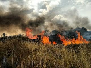 Fogo na região de Lençóis, Chapada Diamantina (Foto: Brigada de Resgate Ambiental de Lençóis)