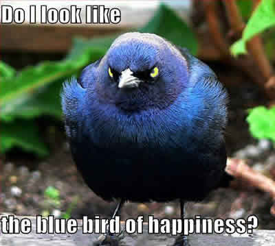 amusing_animal_pics_bird_photograph_words_blue_bird_of_happiness-400md