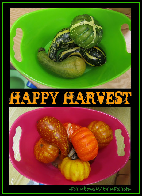 photo of: Happy Harvest: Sorting Fall Gourds in Preschool via RainbowsWithinReach