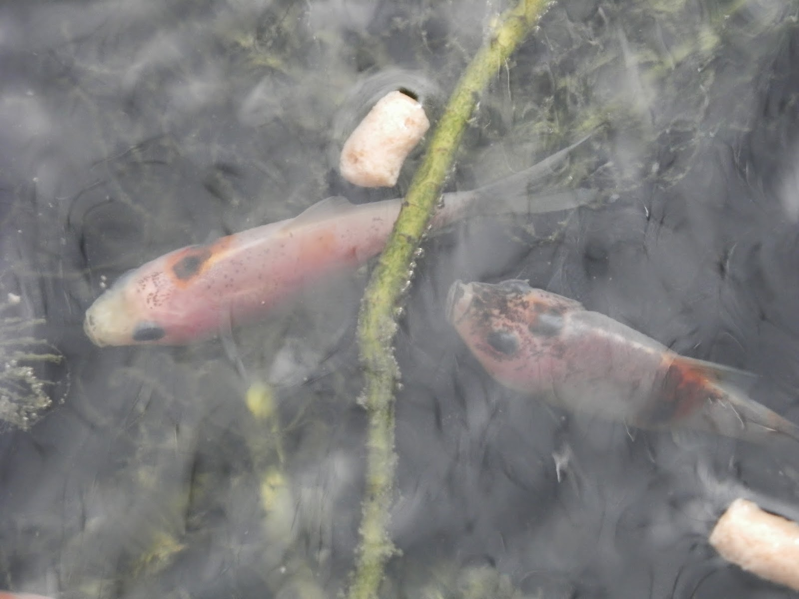 Second hand susie our fish had babies for Can fish see water