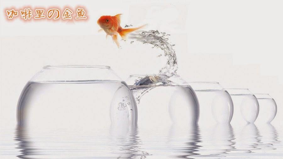 咖啡里の金鱼