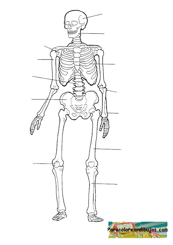 Esqueleto para completar para colorear