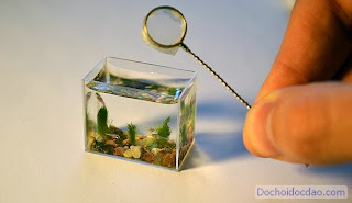hồ cá mini độc đáo