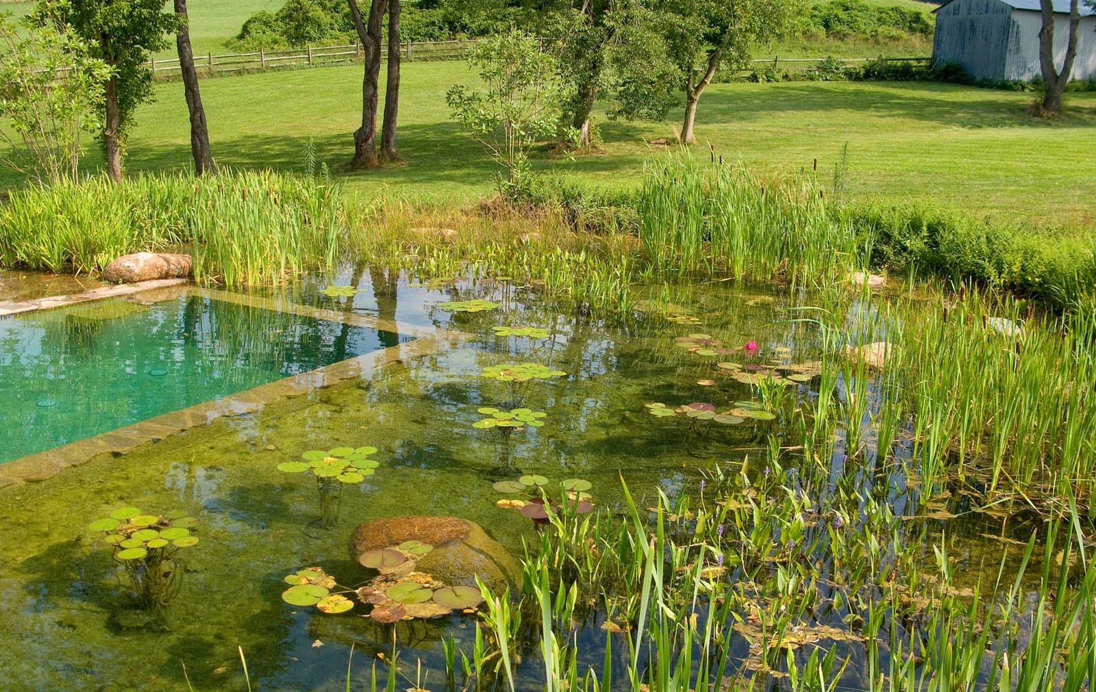 Jardinitis piscinas naturales for Albercas naturales