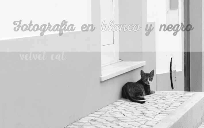 fotografía blanco y negro gato
