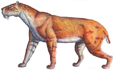 felidae fosil Homotherium