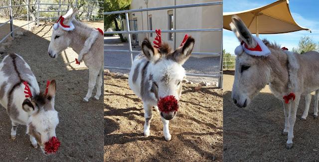 equine therapy rehab Arizona