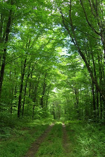 green forest wallpapers