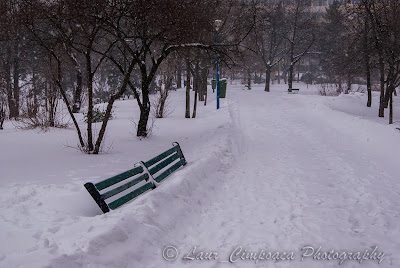 Zapada in Bucuresti, cod galben de ninsoare si viscol