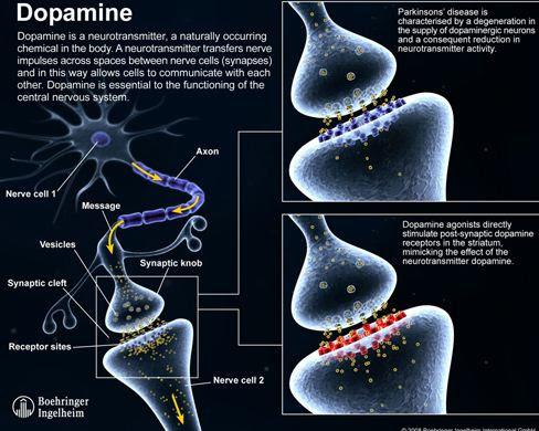 cabergoline side effects steroids