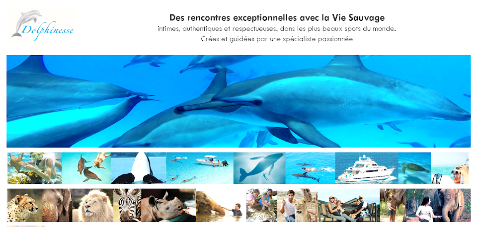 Dolphinesse - Nager avec les dauphins sauvages