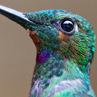A maravilha das cores da natureza