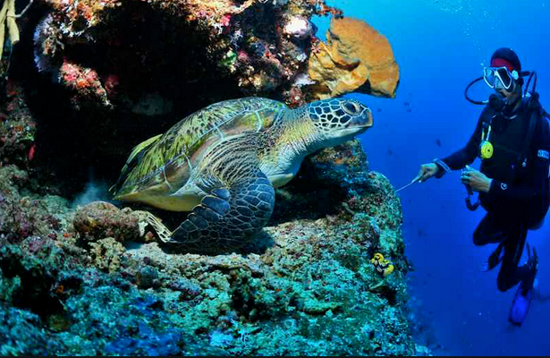 best spot diving - bunaken