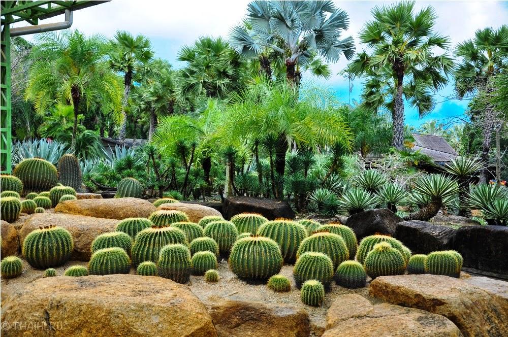 Wallpaper Wallpaper Nong Nooch Tropical Botanical Garden Natural Beauty Of Earth