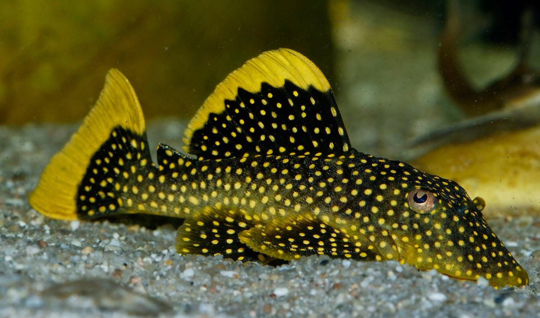 Yuk Saatnya Awasi dan Kendalikan Jenis Ikan Invasif