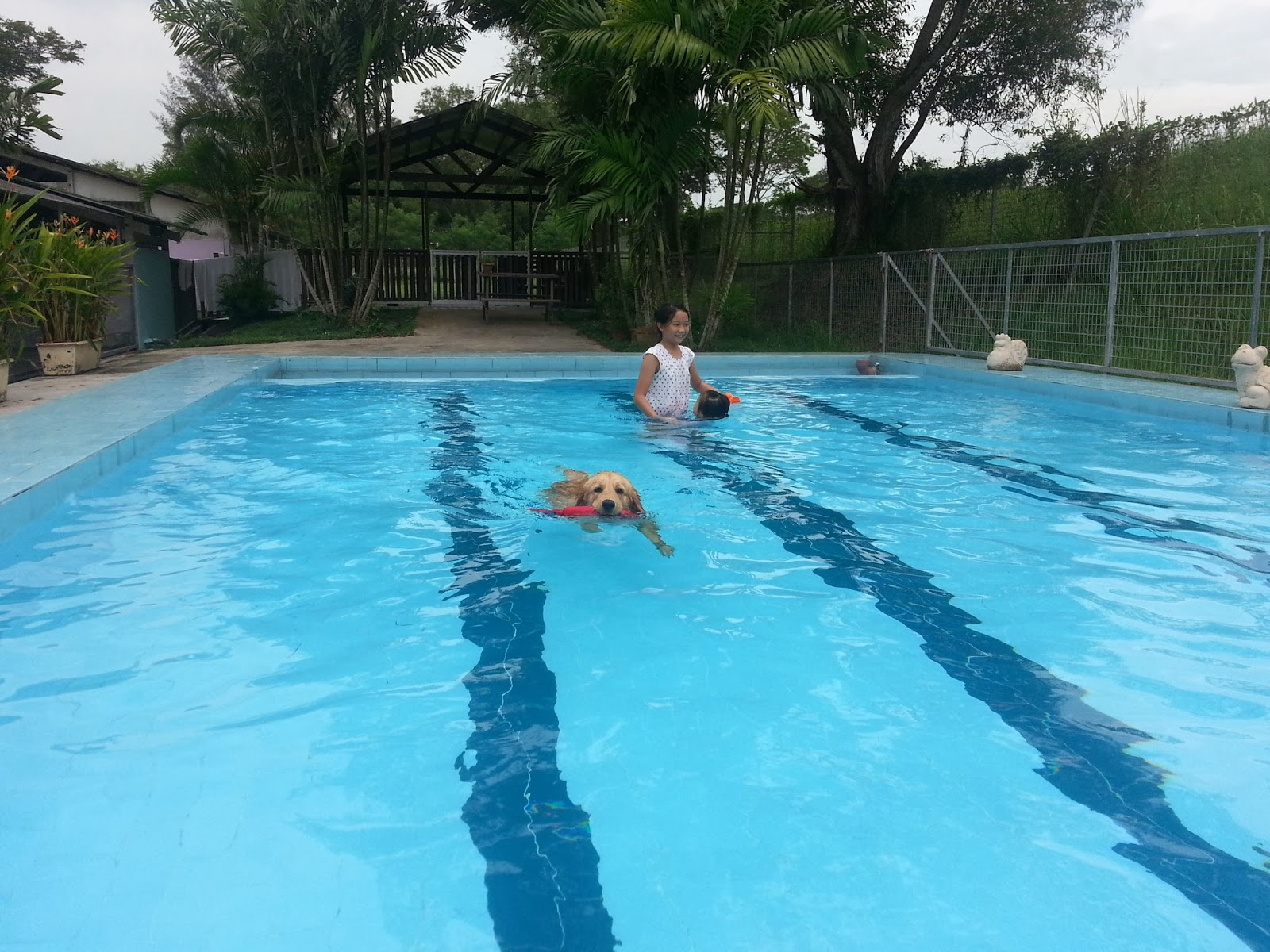After Upetgamart Shifted To The West, The Nearest Doggy Swimming Pool Is  Mutts And Mitten. Itu0027s Located At Pasir Ris Farmway 2. (Opp Pet Hotel)