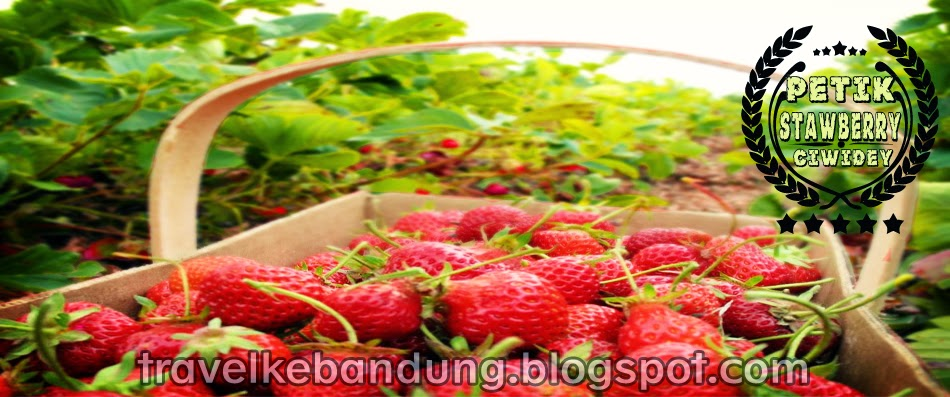 Petik Stawberry Ciwidey Tour and Travel Bandung