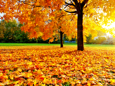 park, fall, leaves,