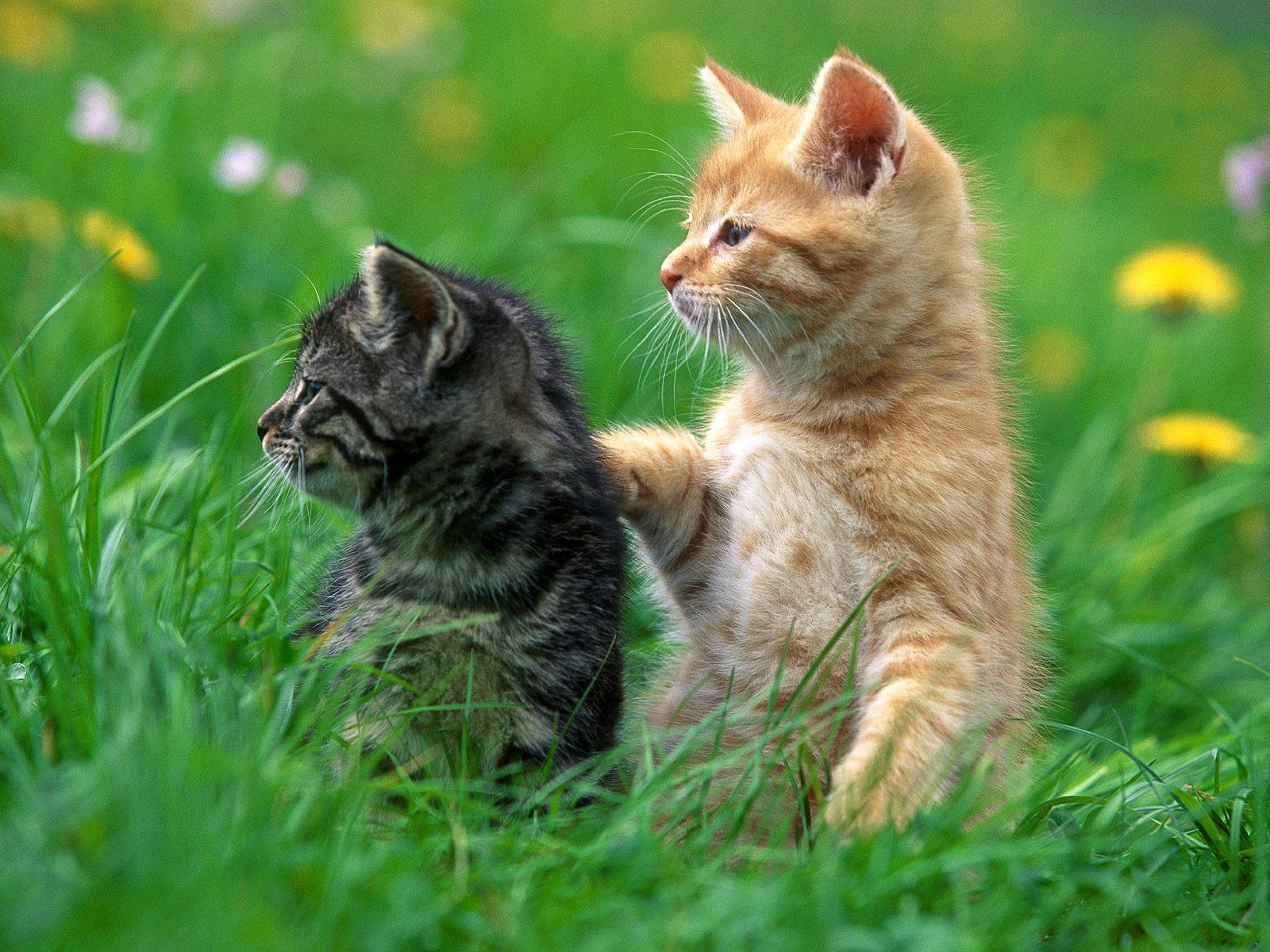 những hình ảnh đẹp động vật , ảnh động vật dễ