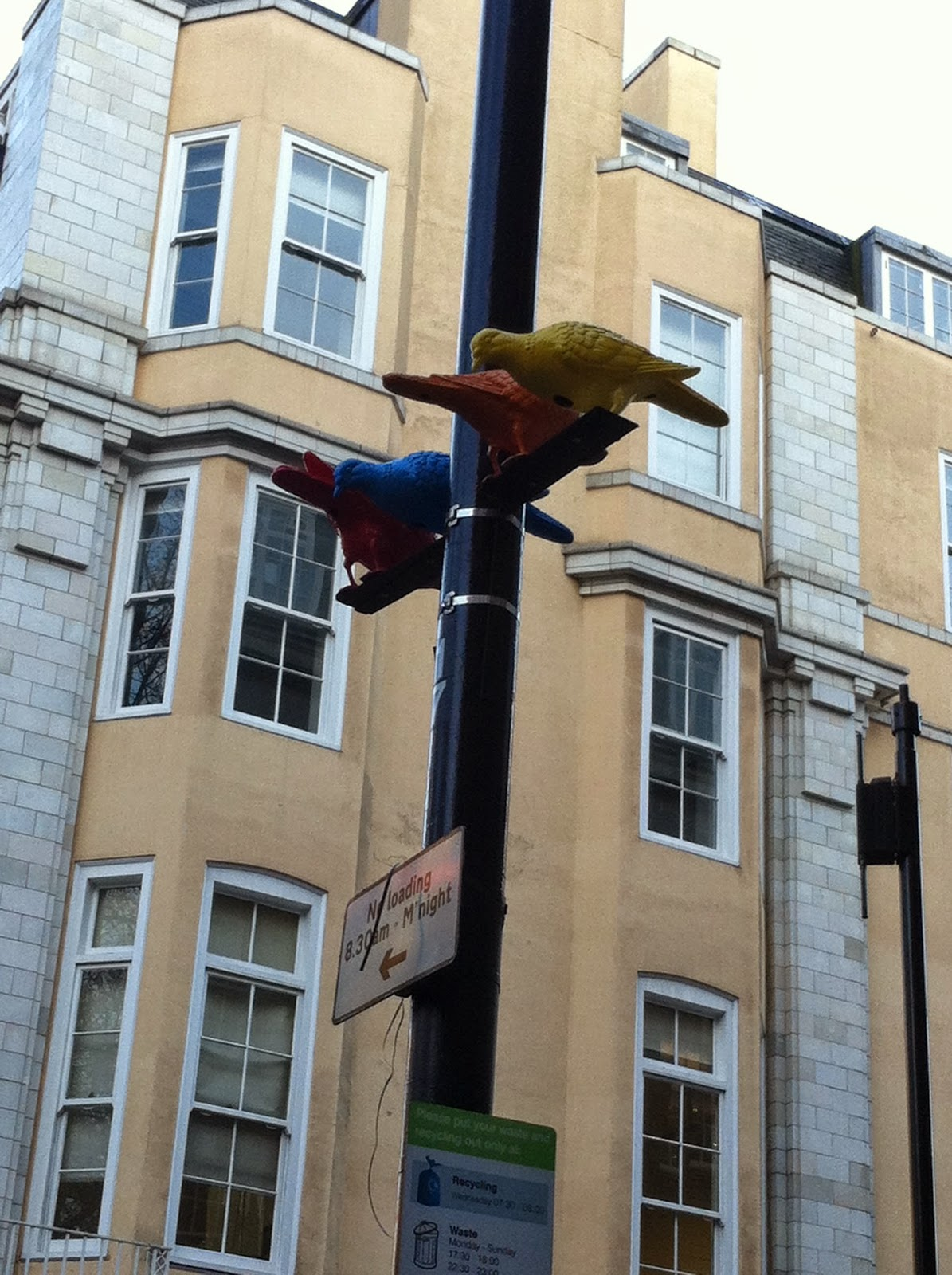 Colourful Pigeons in London