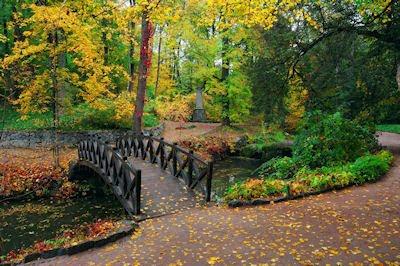 Postales de nuestro planeta - Puente hacia bosque
