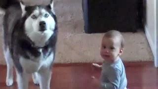 Bayi lucu dan anjing Eksimo