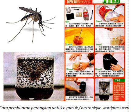 Bingung Cara Usir Nyamuk Coba Buat Perangkap Ini Cantik Dan Sehat