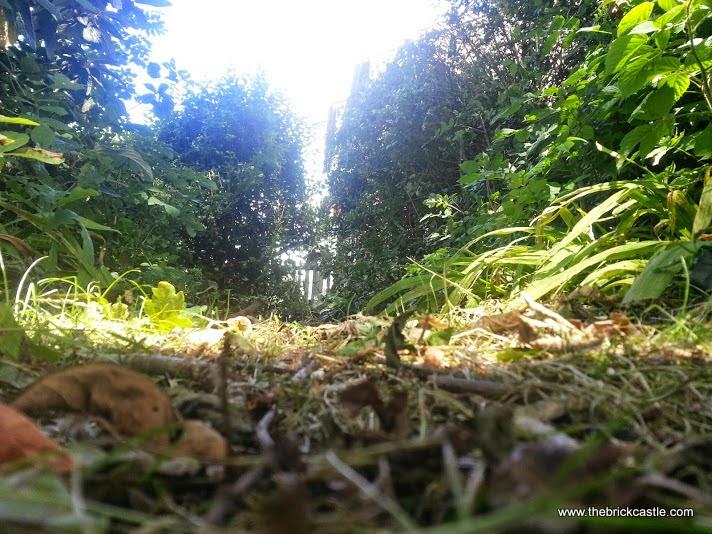 Barny Bear's Little Adventure - Rabbit height view of pathway in garden
