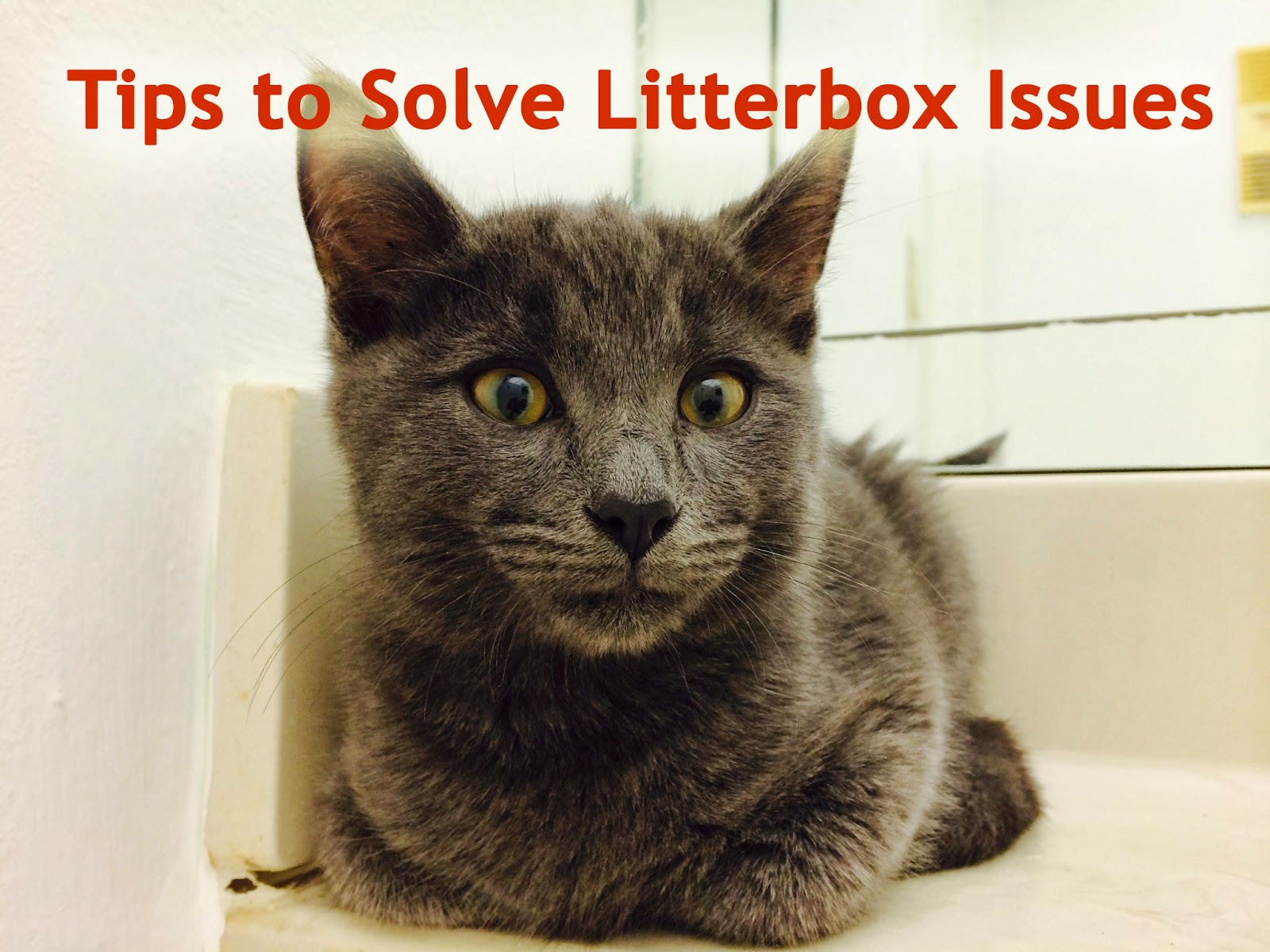 Cat Pees Outside Litter Box Tips