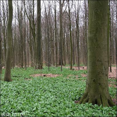 Dižskābāržu mežs Ōrhusā - Riss skov
