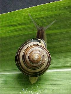 ssiput contoh mollusca