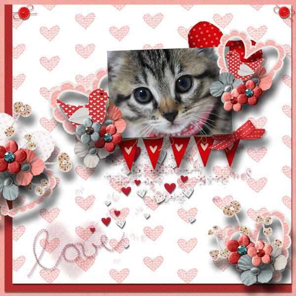 DSB  I love kittens