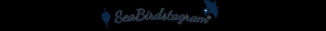 SeaBirdstagram