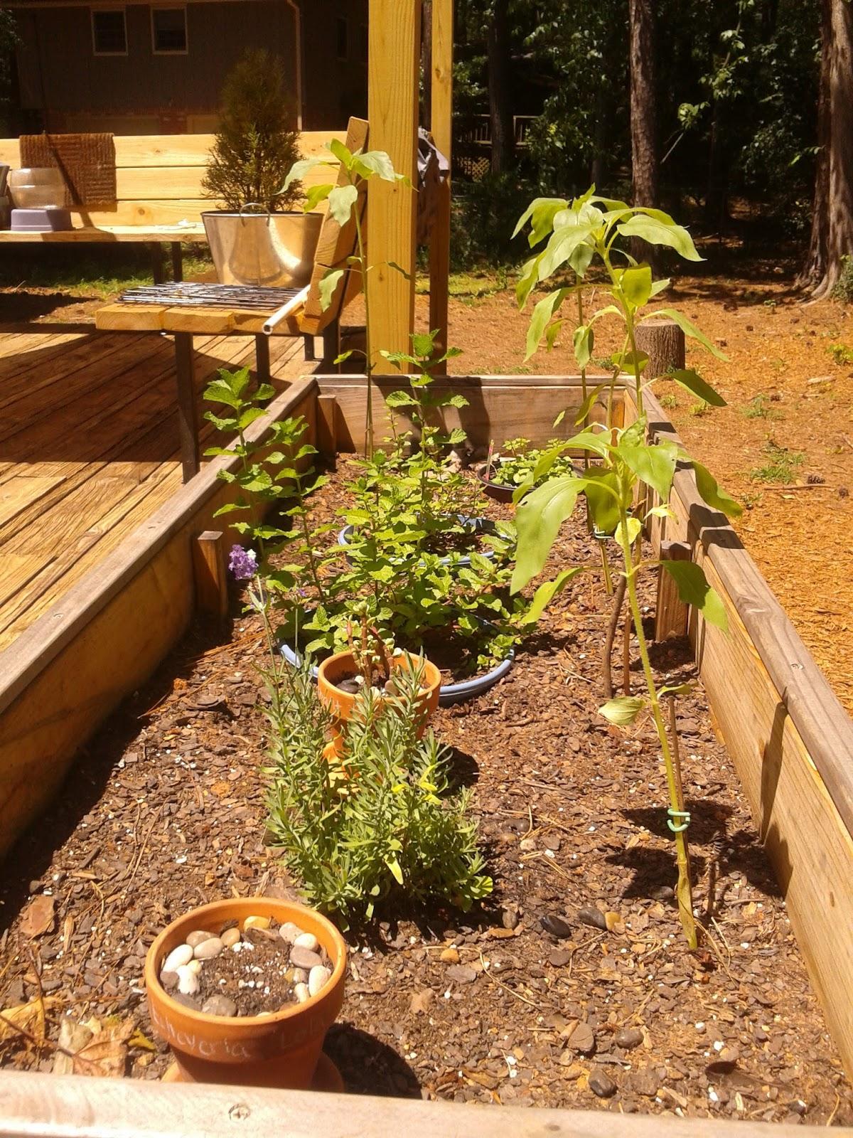 It\'s Not Rocket Science: Garden update