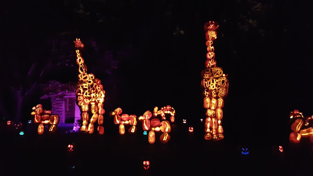 Giraffe Jack O'Lanterns