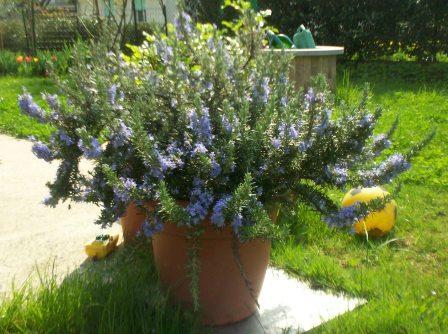 Orto per tutti orto sul balcone for Erbe aromatiche in vaso