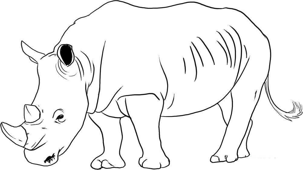 Rinoceronte para colorear - Imagui