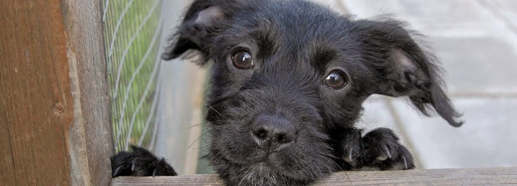 Rspca Rescue Dogs For Sale
