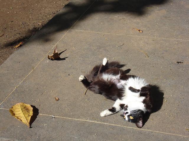 Gato/Foto: Marcelo Migliaccio