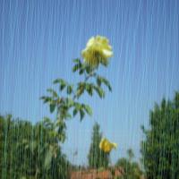 Chuva ou precipitação pluvial.