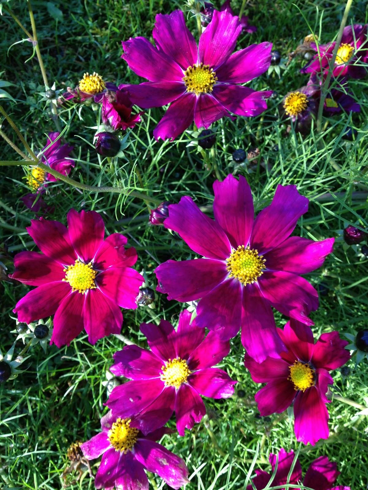 Lill hasta trädgård: mars 2013