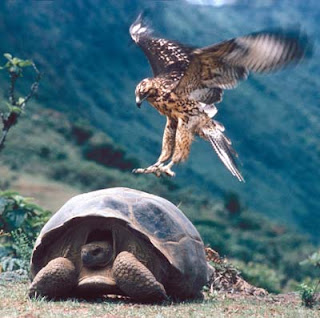 kura-kura Galapagos