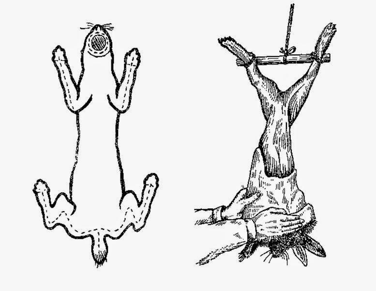 Зняття шкірки кроля